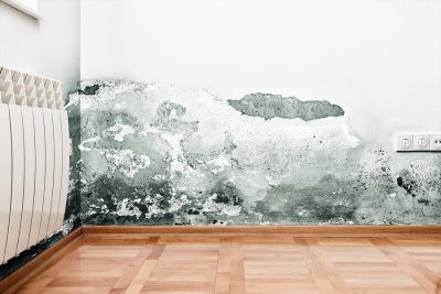 Mold and mildew build up